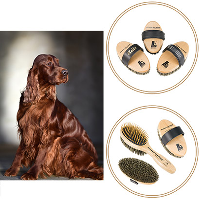 Premium Dog Brushes